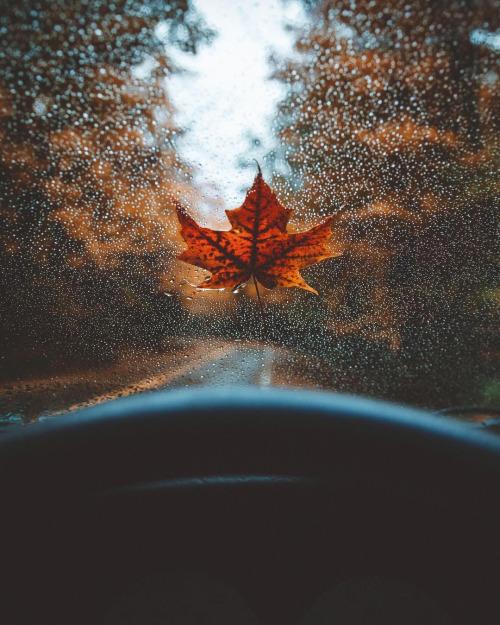 Фото Осенний кленовый листок на лобовом стекле авто
