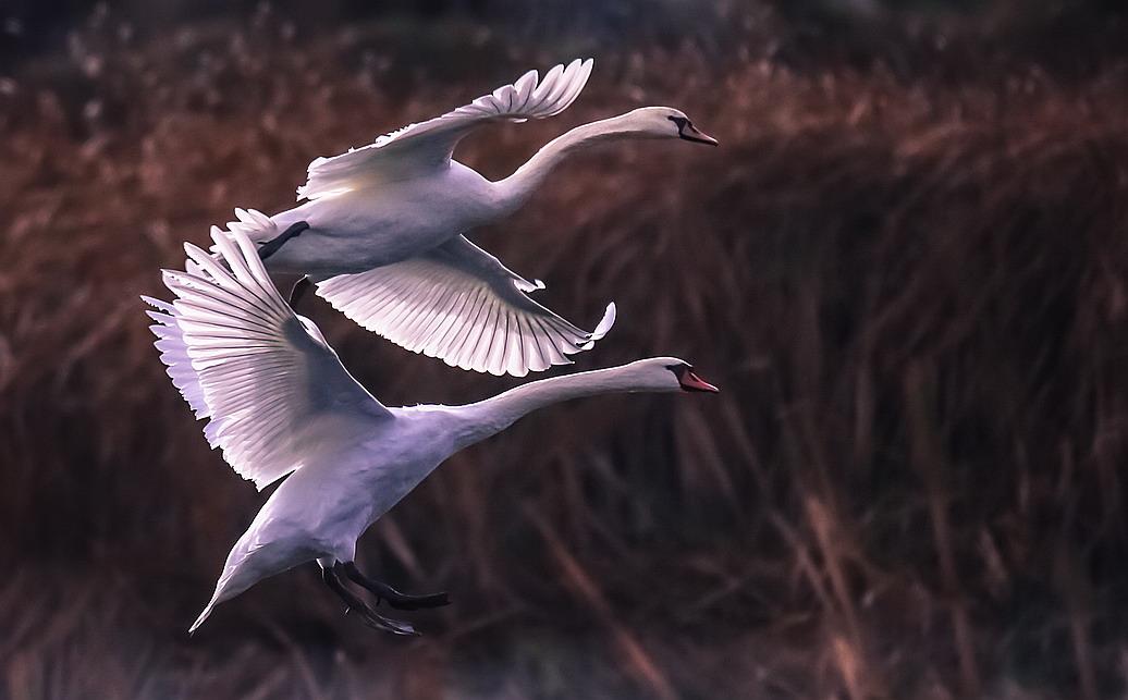 этой фото улетающий лебедь статуэтки