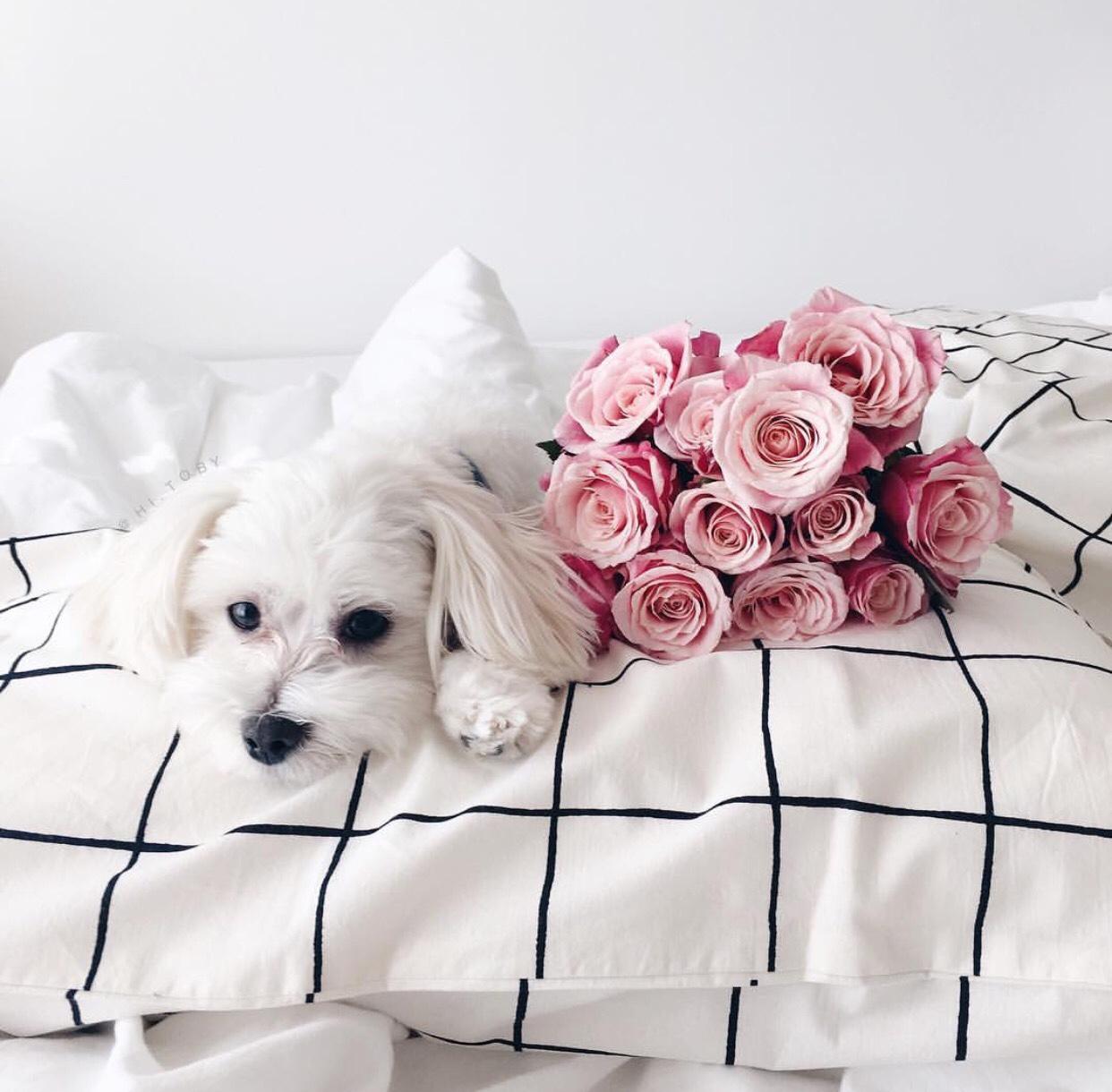 Розы картинки с собаками