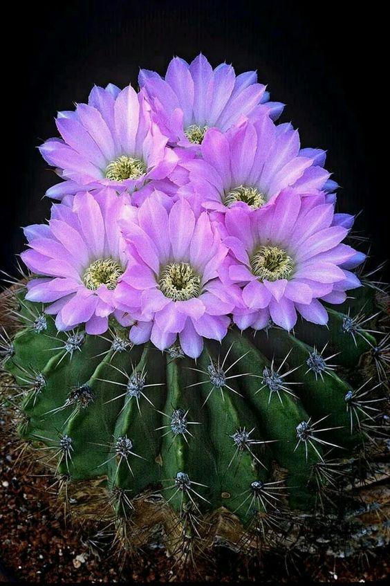 Фото кактуса картинка 8