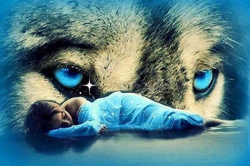 Фото Голубые волчьи глаза над спящей девушкой