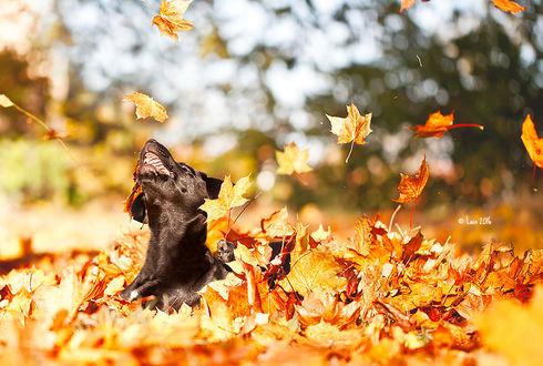 Фото Пес под листопадом, by Lain-AwakeAtNight