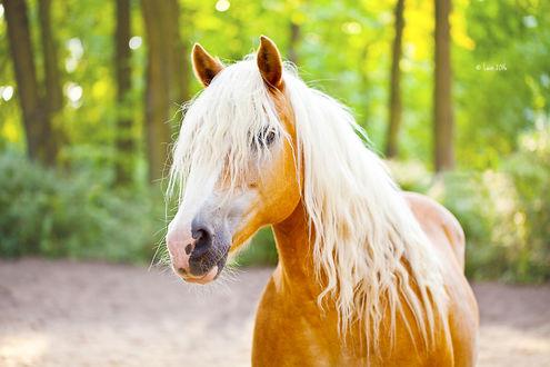 Фото Красивая лошадь, by Lain-AwakeAtNight