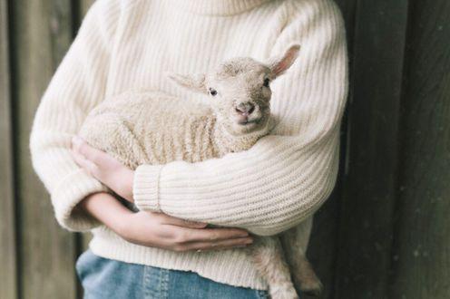 Фото Девушка держит в руках козленка
