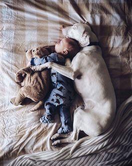 Фото Малыш спит с собакой и мягкой игрушкой