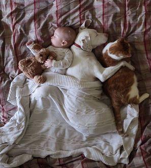 Фото Малыш спит с мягкой игрушкой, рядом спит собака, обнимая кошку