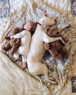 Фото Малыш спит с мягкой игрушкой и собака с мягкой игрушкой