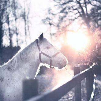 Фото Лошадь в лучах солнца, by sandrawiklander
