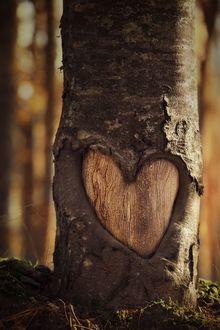 Фото Сердце на стволе дерева