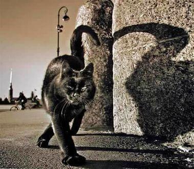 Фото Черная кошка с тенью на стене здания