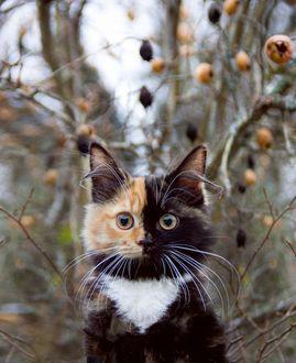 Фото Красивая трехцветная кошечка сидит на фоне деревьев
