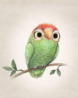 Фото Зеленый попугай сидит на ветке дерева, иллюстрация Sydney Hanson