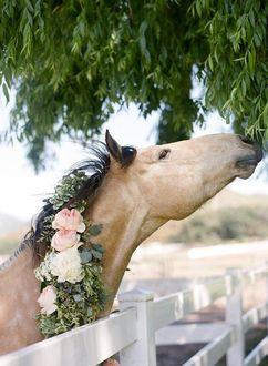 Фото Лошадь с огромным венком на шее стоит за забором