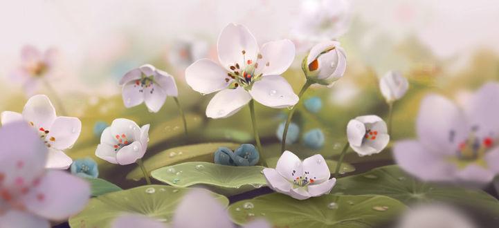 Фото Распустившиеся белые цветы вишни среди зеленых листьев кувшинки, by janicesung