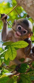 Фото Маленькая обезьяна капуцин среди веток дерева