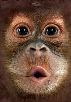 Фото Гримаса удивленной шимпанзе