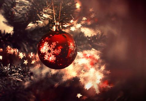 Фото Красный шар на елке, by Thunderi