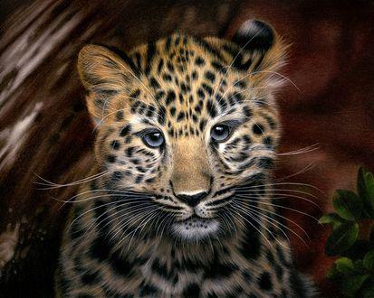 Фото Детеныш амурского леопарда, by Heatherrooney