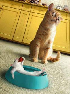 Фото Кот с ужасом наблюдает за тем, как в его любимой миске улегся мышонок, который с наслаждением уплетает клубнику