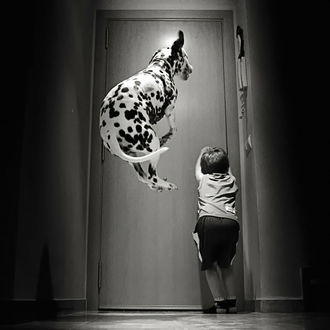 Фото Мальчик и далматинец в прыжке возле двери, by Maximo Panes