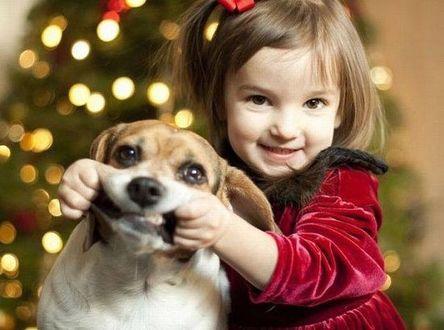 Фото Маленькая девочка с бантиком на голове, в темно -красном платье играет со своей собачкой. На размытом фоне новогодней елки. (Улыбайтесь! А то придет одна девочка и вам поможет!)