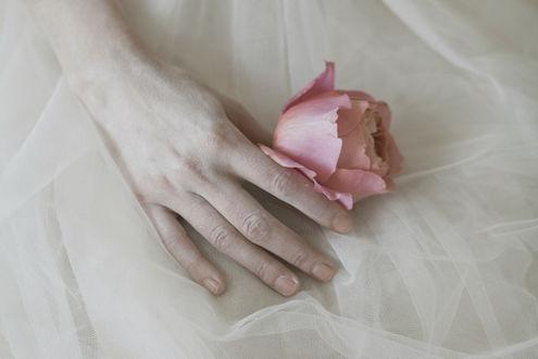 Фото Рука девушки в белом платье держит розу