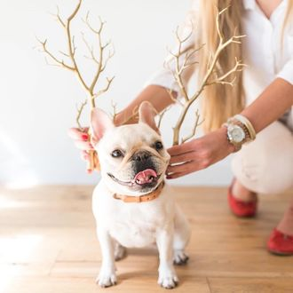 Фото Девушка держит декоративные ветви, как оленьи рога, около головы мопса