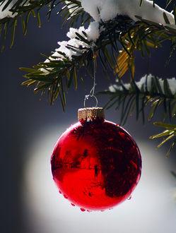 Фото Красный новогодний шар, с капельками воды на нем, висит на заснеженной ветке