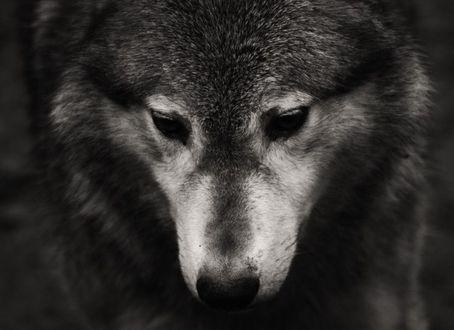 Фото на аву в вк для пацанов с волками