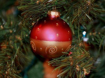 Фото Красный шар на новогодней елке, фотограф Aravind DSouza