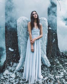 Фото Красивая девушка белый ангел стоит в лесу в легкой дымке на земле осыпанной перьями, by Adam Bird