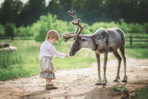 Фото Маленький ребенок протянул руку оленю, стоя на дороге в сельской местности