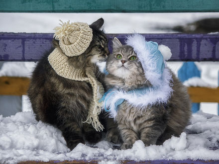 Фото Кот и кошка в шапочке и шарфике сидят на заснеженной лавочке / Зимнее свидание, фотограф Ирина Приходько