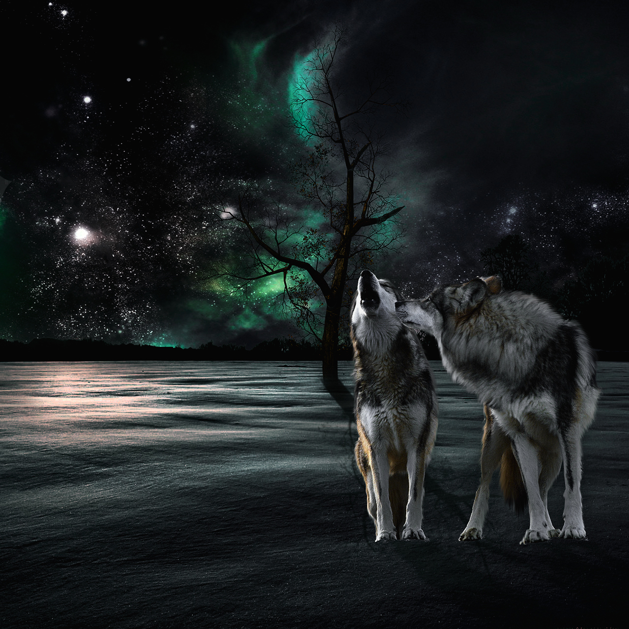 ряде картинки волков ночью гражданином германии, материалы