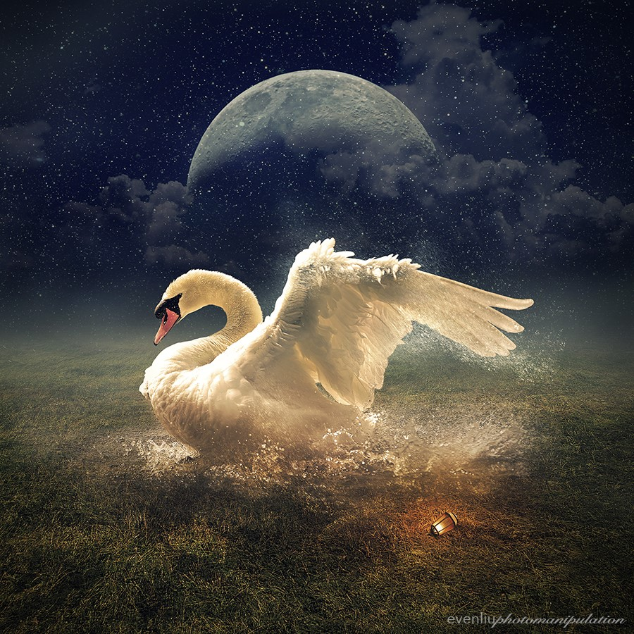 картинки одинокая лебедь в небе конкурс стаскивание