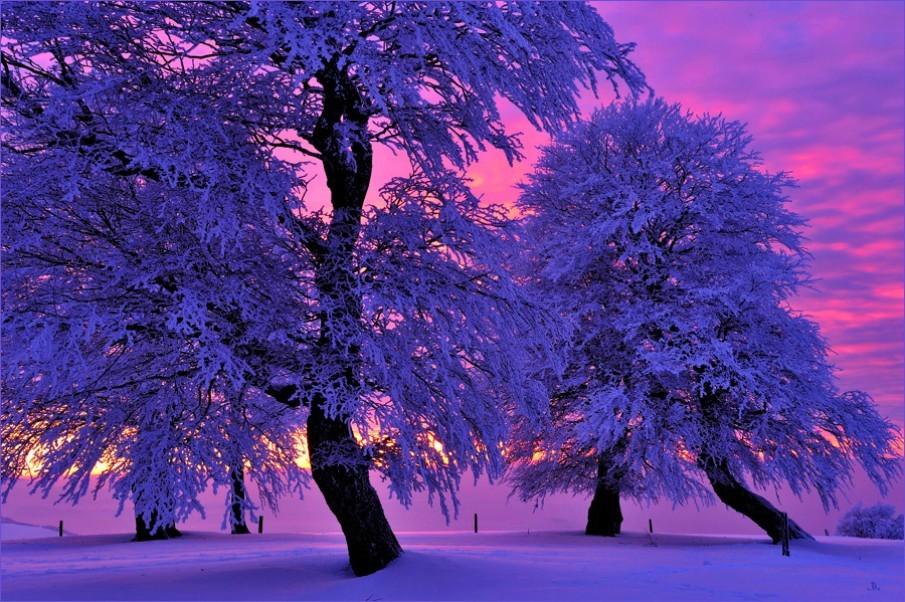 Зимний пейзаж, деревья окутаны снегом на фоне прекрасного сиреневого заката