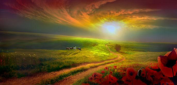Фото Лошади на поле, на переднем плане красные маки, фотограф Igor Zenin