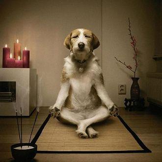 Фото Собака йог сидит на коврике в позе лотоса в комнате с соответствующим интерьером