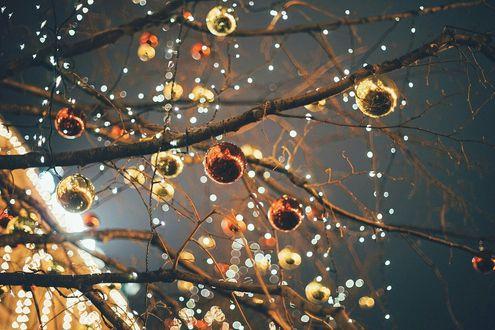 Фото На голых ветвях дерева висят елочные шары