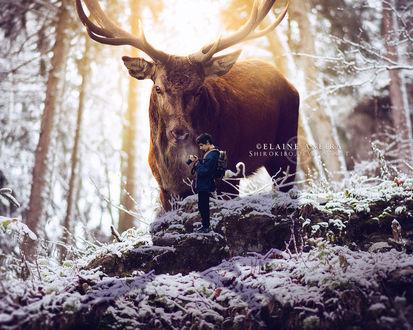 Фото Мужчина с фотоаппаратом, за которым наблюдает огромный олень, в зимнем лесу, by Shirokibo