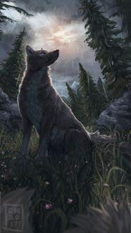 Фото Волк сидит на поляне с цветами под дождем, by monrroe