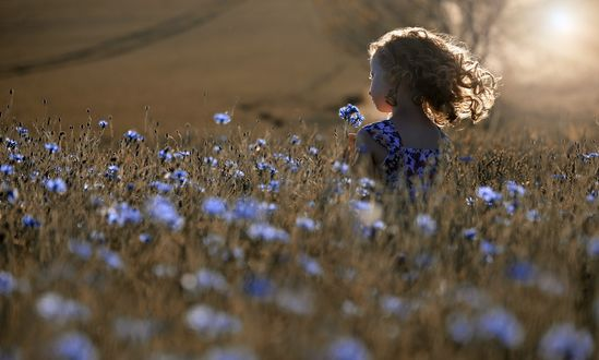 Фото Девочка собирает васильки на поле