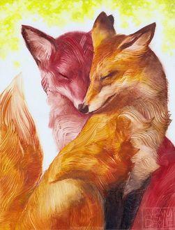 Фото Влюбленные лис и лиса, by Adams Doyle