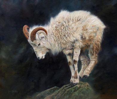 Фото Горный козел стоит на вершине скалы, by Sarah Stribbling