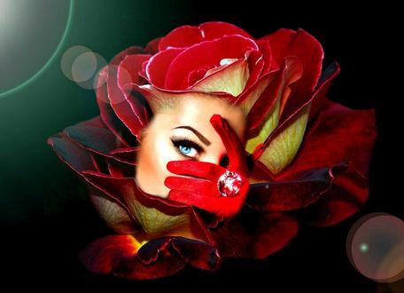 Фото Работа Бриллиантовая роза, лицо девушки на фоне красной розы, автор Елизавета Мур