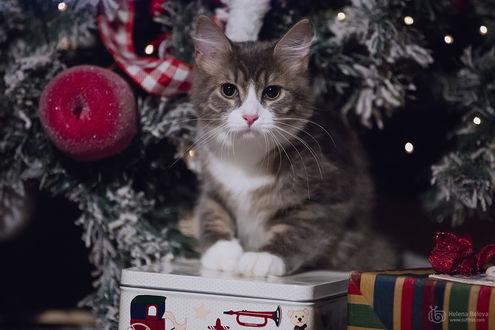 Фото Кошка сидит у елки, фотограф Helena Belova