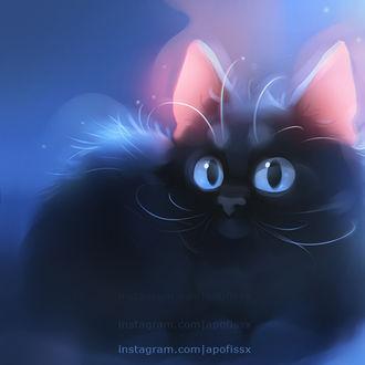 Фото Черный котенок с голубыми глазами, by Apofiss