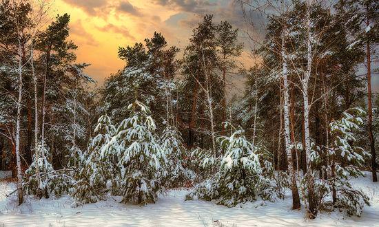 Фото Зимний лес на закате, фотограф Михаил Шер