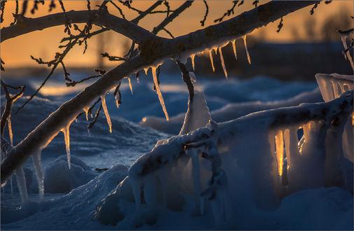 Фото Обледеневшая ветка, минус 35, фотограф Юрій Веремчук