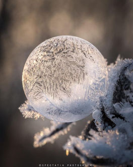 Фото Мыльный замороженный пузырь на ветке